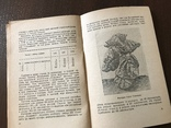 1939 Високі врожаї махорки, фото №10