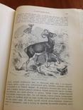 Происхождение  животнаго мира  Д-ра  Вильгельма Гааке  1903 года, фото №5