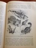 Происхождение  животнаго мира  Д-ра  Вильгельма Гааке  1903 года, фото №6