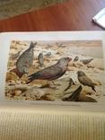 Происхождение  животнаго мира  Д-ра  Вильгельма Гааке  1903 года, фото №9