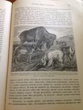 Происхождение  животнаго мира  Д-ра  Вильгельма Гааке  1903 года, фото №12
