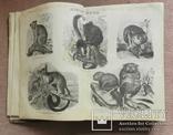 Настольный энциклопедический словарь. 1899 г. т.7, фото №9