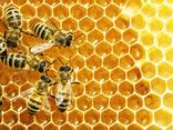 Мед натуральный июль 2018 разнотравья, цветочный, фото №2