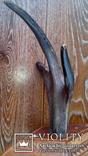 Рог косули на дереве, фото №3