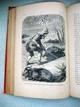 Книга *Робинзон Крузо* французский язык 15 иллюстраций. *Золотой обрез*., фото №13