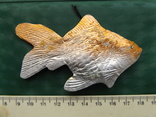 Золотая рыбка, фото №3