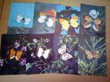 Бабочки Закавказья, набор 18 открю, изд. Планета 1988г, фото №7