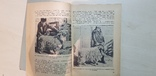 Городское козоводство 1937 год. тираж 3 тыс., фото №5