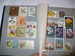 Флора и фауна стран мира в альбоме, фото №6