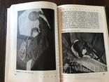 1929 Фотография Культовая Книга Трошина, фото №10