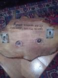 Рога сайгака, фото №8