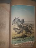 1866 Жизнь птиц с 27 цветными иллюстрациями, фото №2