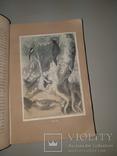 1866 Жизнь птиц с 27 цветными иллюстрациями, фото №4