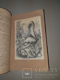 1866 Жизнь птиц с 27 цветными иллюстрациями, фото №9