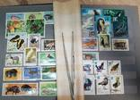Альбом с марками Животный мир (птицы, рыбы и пр.), фото №3