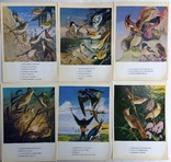 1983  Птицы России. Забайкалье. Выпуск 1. 32 открытки., фото №3