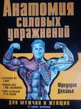 Анатомия силовых упражнений фото 1