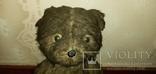 Медведь ревун 50-60 года, фото №3