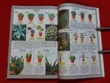 Всё о комнатных растениях.Д-р Д.Г.Хессайон 2004г., фото №5