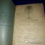 1909 Каталог деревьев Минск 25х17 см., фото №4