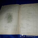 1909 Каталог деревьев Минск 25х17 см., фото №5