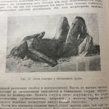 Книга «Судебная медицина» 1950 год, фото №4