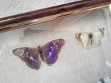 Коллекция бабочек, фото №7