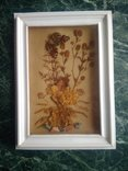 Бабочка и гербарий из далёких времен ссср, фото №5