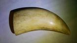 Зуб кашалота 216 гр., фото №8