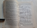 Любительское виноградарство 1988  207 с. ил., фото №6