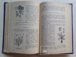Советы огородникам 1973 200 с.ил., фото №9