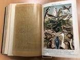 Большая энциклопедия. Том 3. 1901 год., фото №11