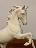 Лошадь Kaiser, фото №4