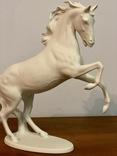 Лошадь Kaiser, фото №5