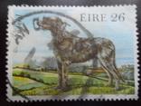 Фауна. Ирландия. Собака.  гаш, фото №2
