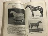 1936 Харків, Годівля та утримання коней, фото №2