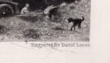 """Гравюра. Дж. Констебл - Лукас. """" Вереск"""". До 1840 года. (42,8 на 29 см). Оригинал. фото 6"""
