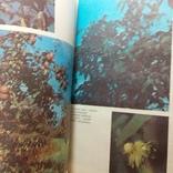 """Мамчур """"Овочі і фрукти в нашому харчуванні"""" 1988р., фото №4"""