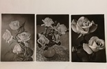 Открытки черно-белые. Розы., фото №2