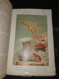 1896 Жизнь моря в 2 томах, фото №2