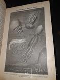1896 Жизнь моря в 2 томах, фото №5