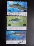 Фауна моря. Папуа Новая Гвинея. Дельфины. гаш, фото №2