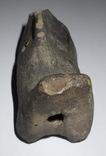 Керамо-пластика зооморфна, черняхівська культура, фото №8