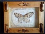 Бабочка в рамке, фото №2