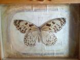 Бабочка в рамке, фото №3
