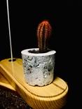 Светильник настольный CHEFIRCHIKo НС000101 , с вазоном для кактуса фото 2