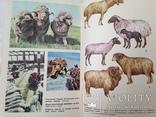 Беседы о животноводстве  Залыгин А.Г.  Просвещение 1986. 126с. ил., фото №12