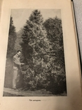 Декоративное садоводство краткий словарь-справочник 1949 г. №7к, фото №10