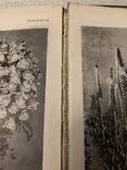 Декоративное садоводство краткий словарь-справочник 1949 г. №7к, фото №12