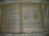 Флора средней России, книга 1933, фото №8